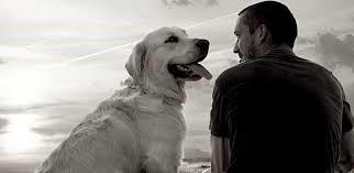 Sentimento animale_elogio_del_cane