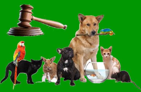 leggi a tutela degli animali e ambiente