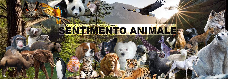 Sentimento Animale