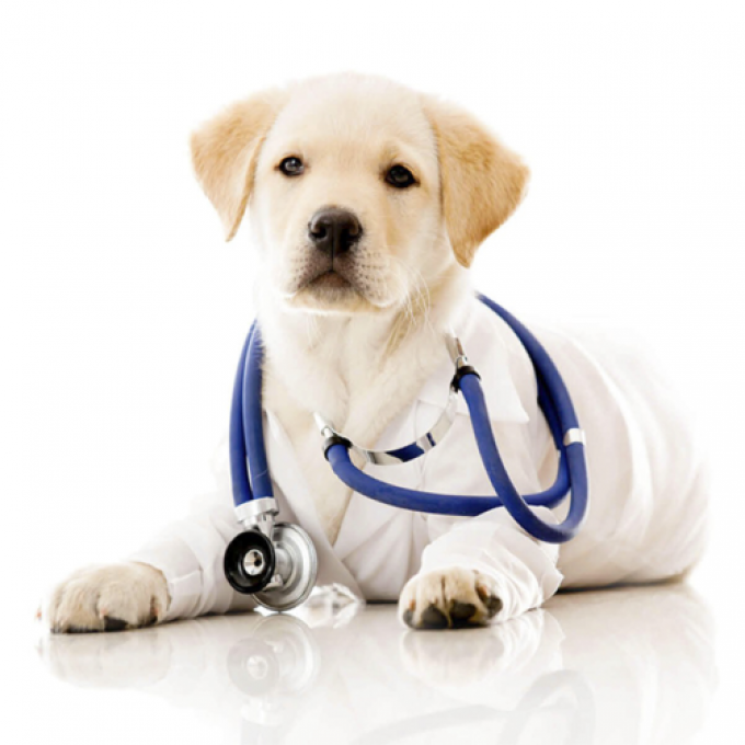 il veterinario risponde